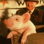 Conheça curiosidades sobre o filme Babe – O Porquinho Atrapalhado